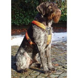 niggeloh harnais pour chien taille xs colliers harnais accessoires pour chien. Black Bedroom Furniture Sets. Home Design Ideas