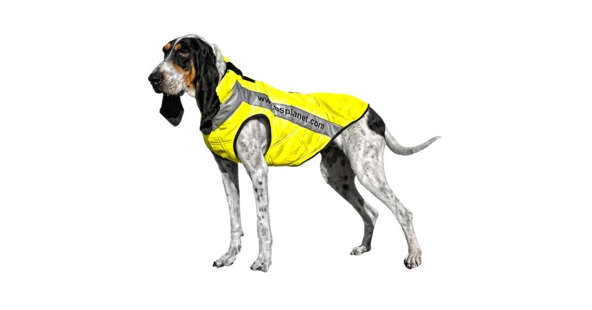 bs planet gilet de protection pour chien version s jaune pour femelle colliers harnais. Black Bedroom Furniture Sets. Home Design Ideas